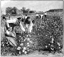 Cotton industry, early 20th century