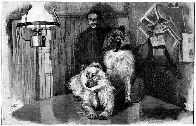 Arctic explorer and dogs, 19th century