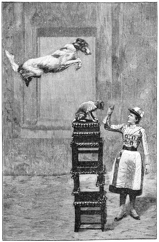 Trained dogs, 19th century