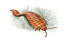 Prehistoric millipede, artwork