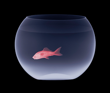 Goldfish in a fishbowl, X-ray