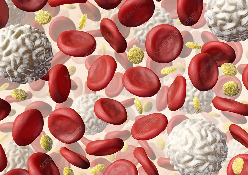Blood cells, artwork