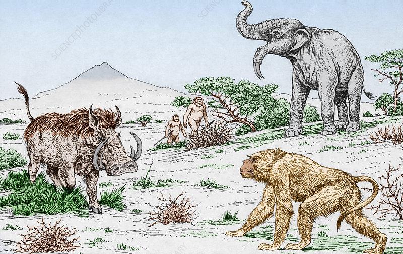Image of: Remains Prehistoric Extinct Animals Izismilecom Prehistoric Extinct Animals Stock Image C0117838 Science