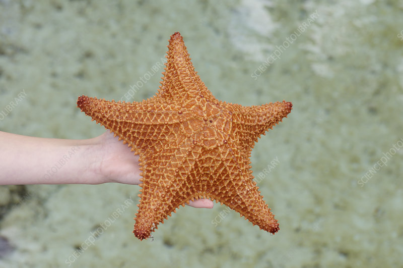 Child with sea star