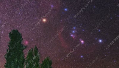 Orion over trees