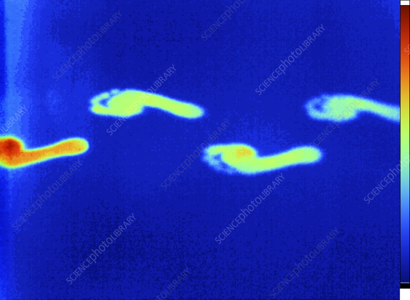 Thermogram of thermal footprints