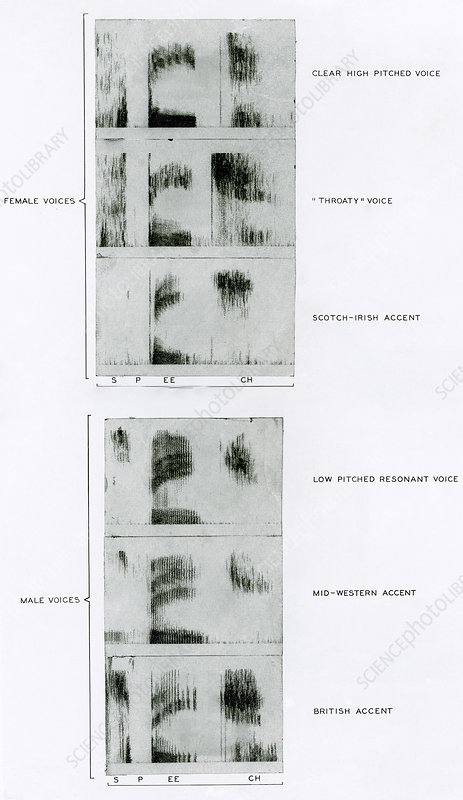 Spectrograms of the word Speech