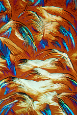 Glycine crystals, light micrograph