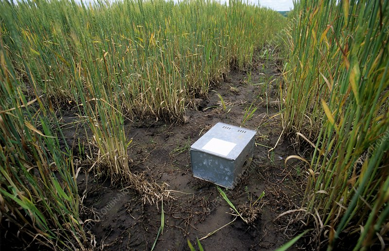 Rodent trap in a field