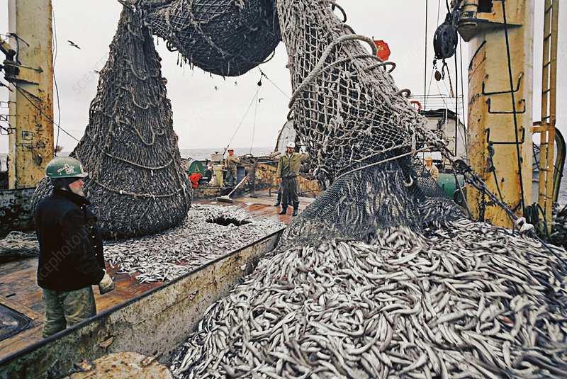 Emptying fishing nets