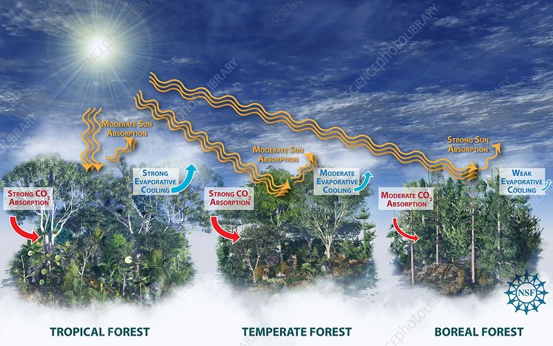 Affects of forest types on climate
