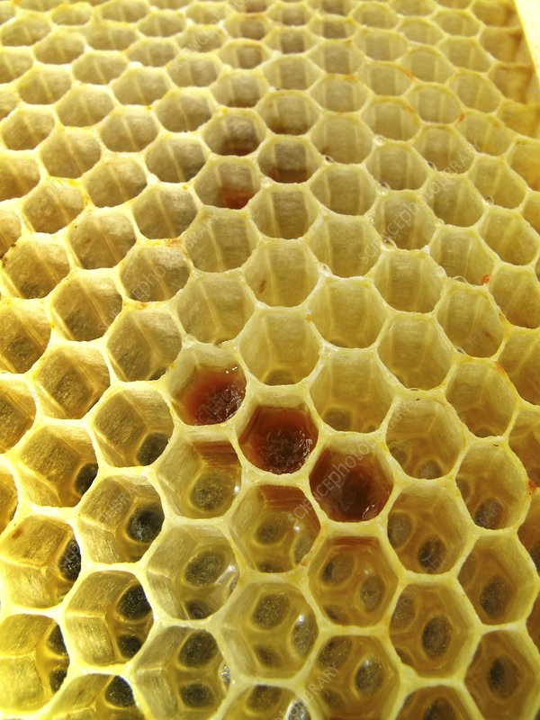 Pollen in wax honeycomb cells