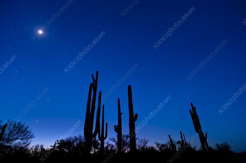 Moon and stars over a desert