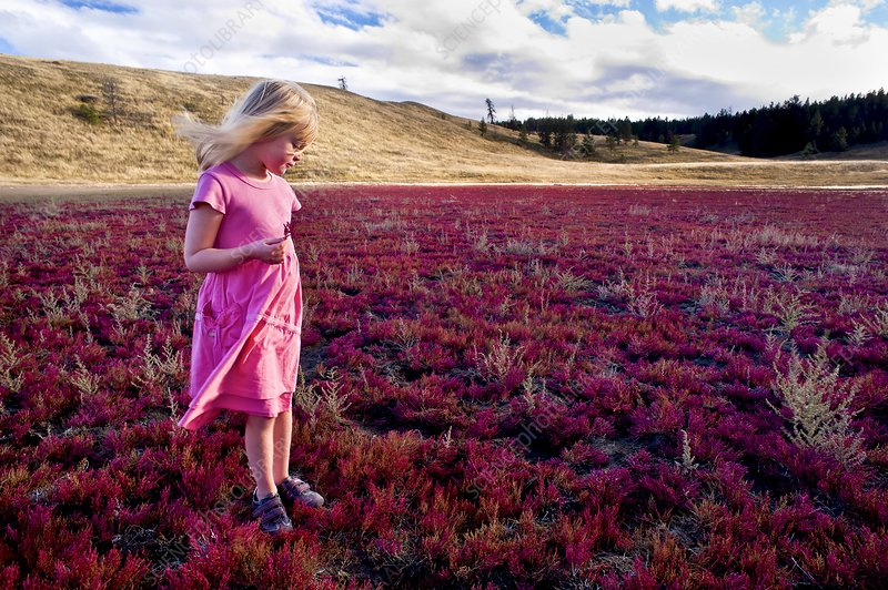 Girl and red glasswort