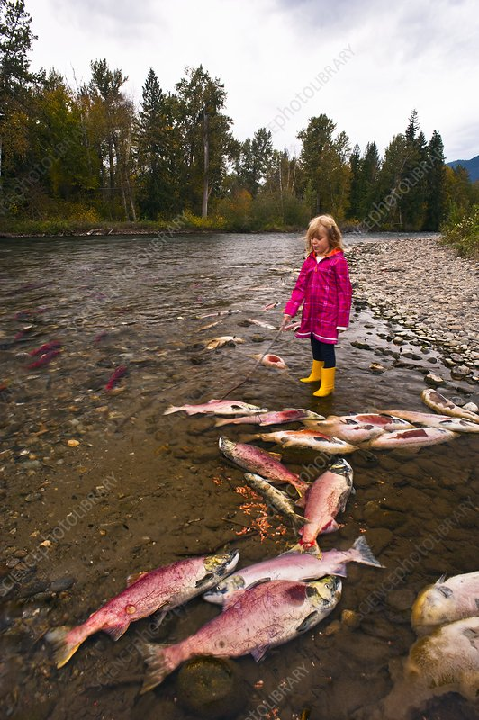 Girl watching salmon spawn