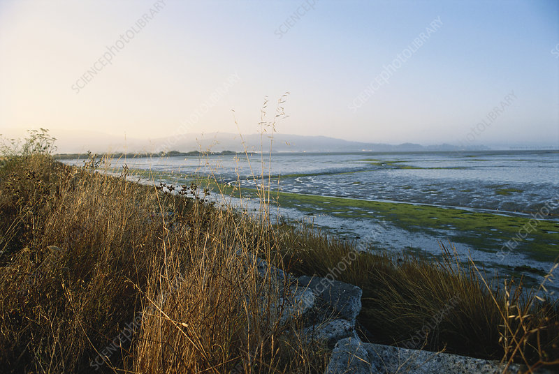 Salt Marsh, California
