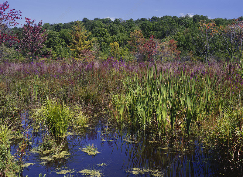 Marsh in the Delaware Water Gap