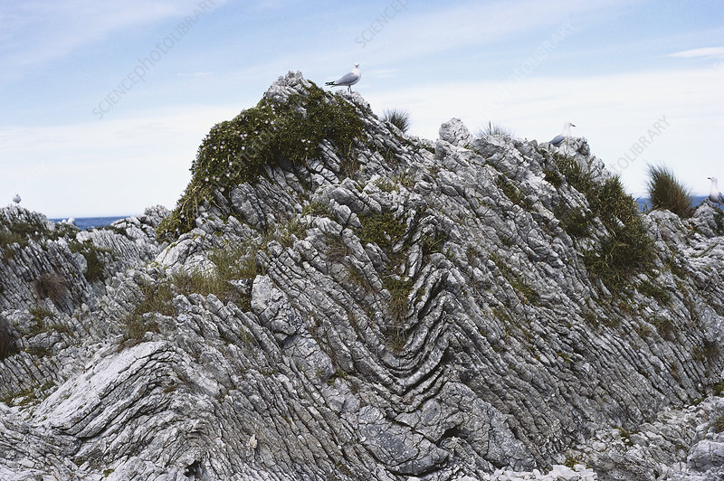 Folded Limestone, New Zealand