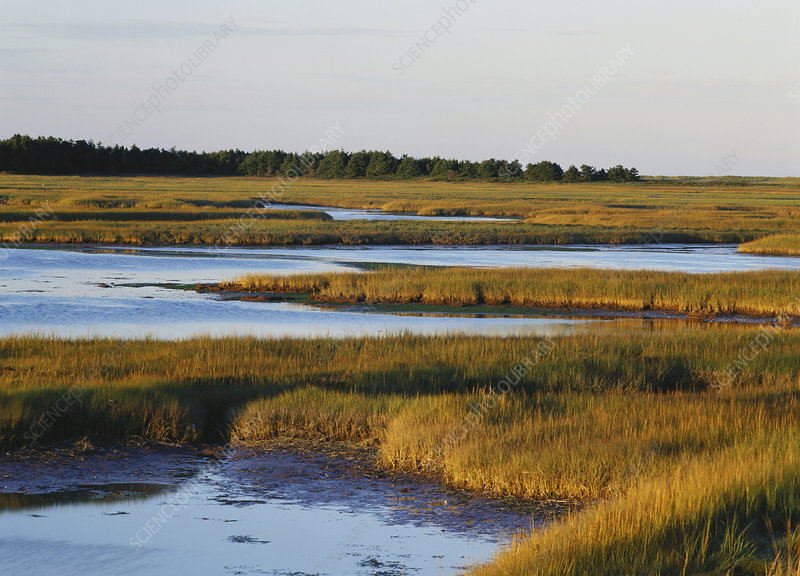 Salt Marsh, Prince Edward Island