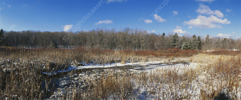 Pennsylvania Marsh in Winter