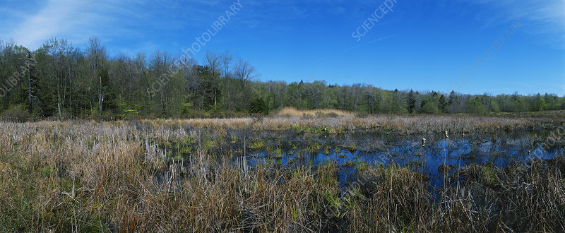 Pennsylvania Marsh in Spring