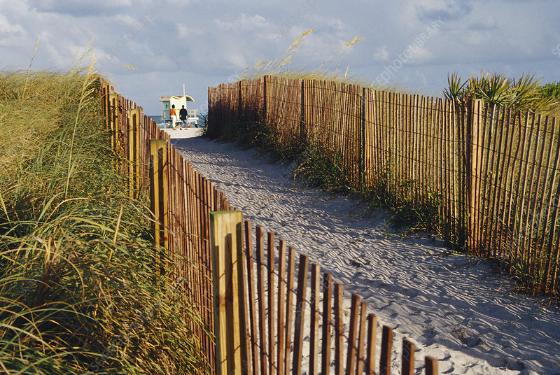 Fence to Protect Dunes