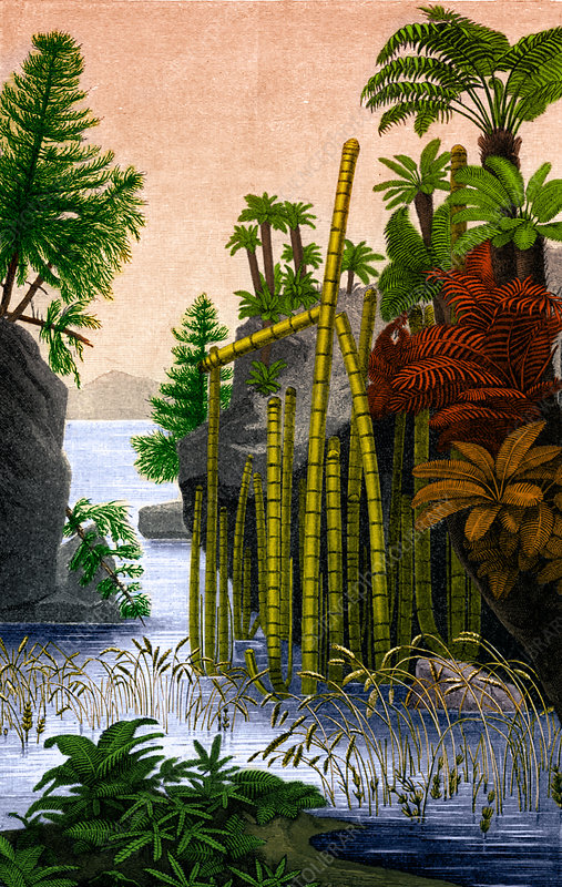 Plants of the Triassic Period