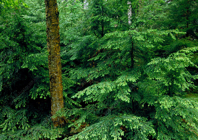 Hemlock-Northern Hardwood Forest