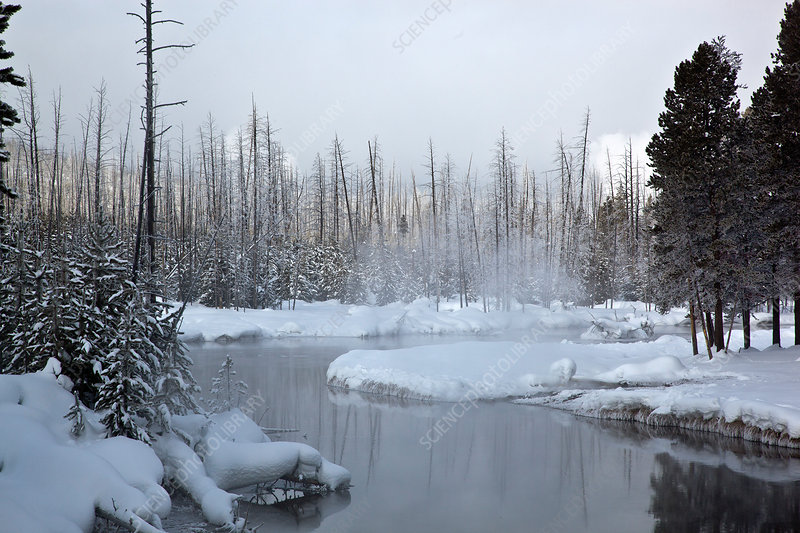 Gibbon River, Yellowstone, USA