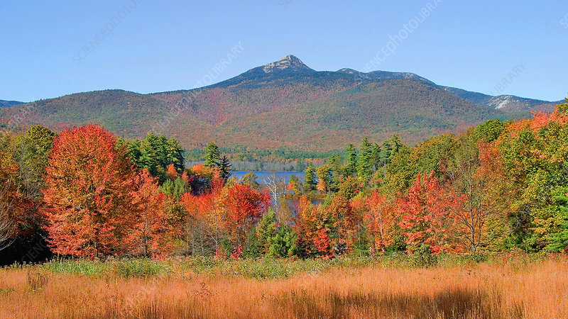 Mt. Chocorua in Autumn