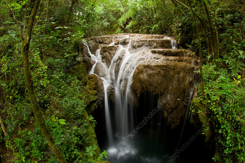 Rainforest Stream and Waterfall