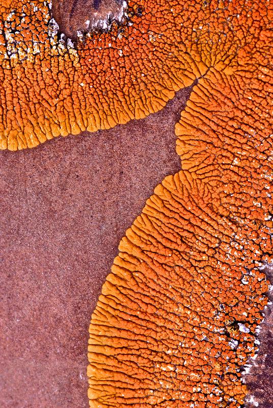 Lichen Forms on Concretion