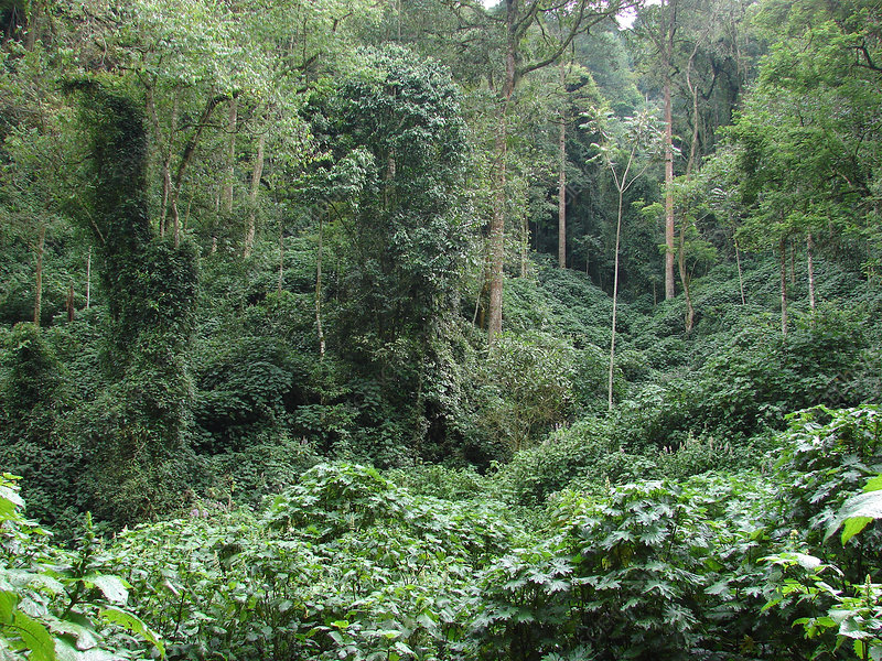 https   www.sciencephoto.com media 445000 view hoh-rainforest ... fd9ea4a4e2d7