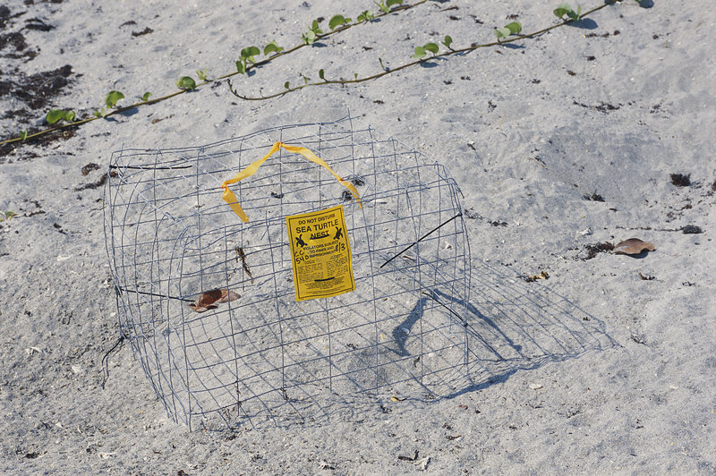 Cage Protecting Sea Turtle Nest