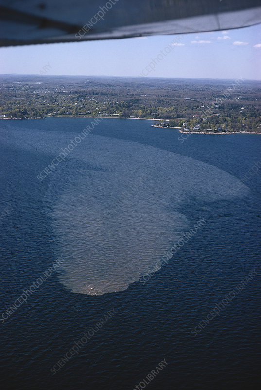 Sewer Water in the Sea off Beverly, USA