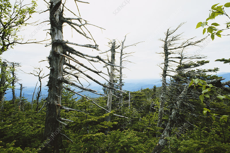 Trees Damaged by Acid Rain