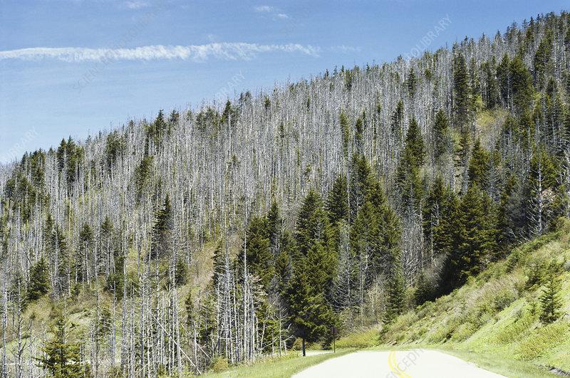 Forest Damaged by Acid Rain Stock Image C012/1599 Science Photo ...