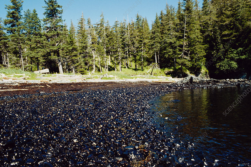 Oily Beach After Exxon-Valdez Spill, USA