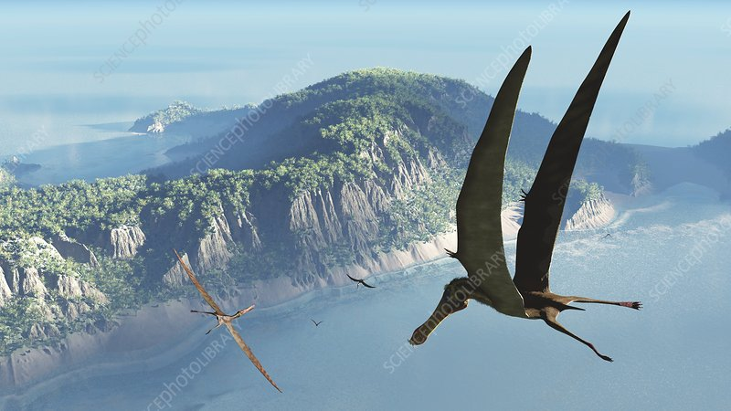 Anhanguera pterosaurs, artwork