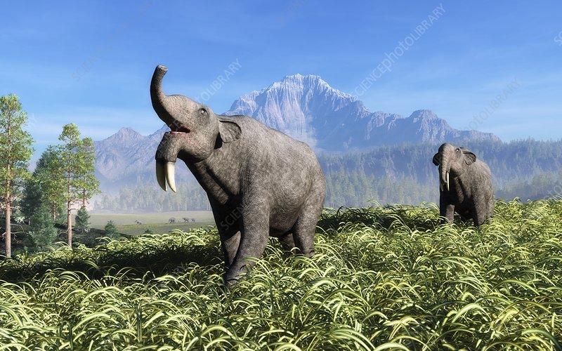 Prehistoric elephants, artwork