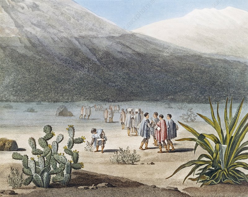 Humboldt in the Andes, 1802