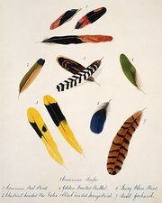 Bird feathers from India