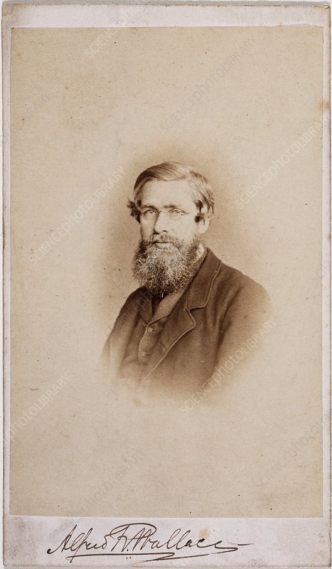 Alfred Russel Wallace, British naturalist