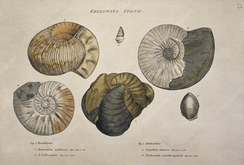 Kelloways stone and indicative fossils