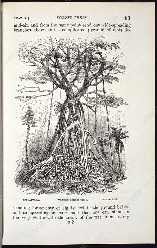 Strange forest tree, 19th century artwork