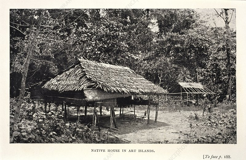 Native house in the Aru Islands