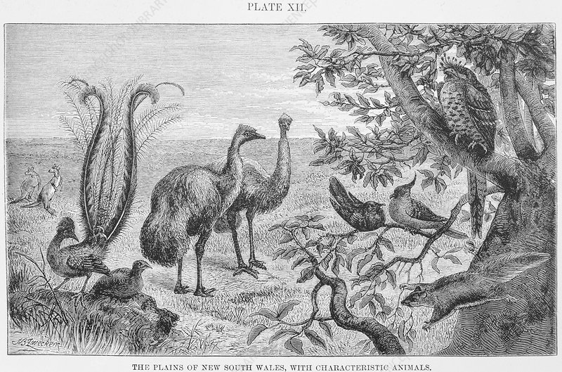 Animals of the plains of New South Wales