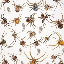 Crab spiders and scorpions, artwork