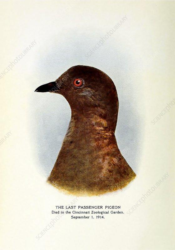 1914 Extinct last passenger pigeon Martha