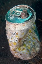 Coconut octopus sheltering in a can